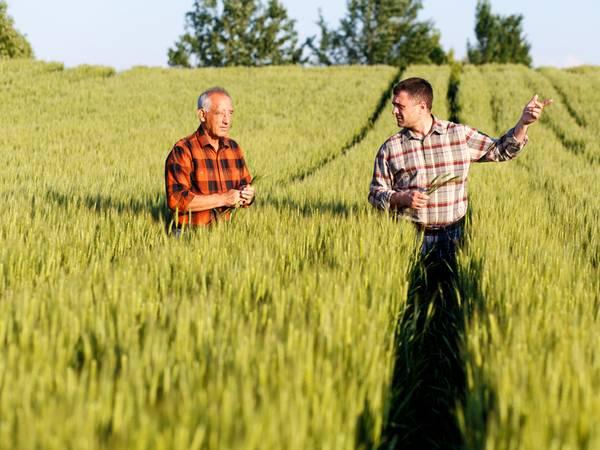 landwirtschaftliche Fläche kaufen, Acker pachten, Feld pachten, Foto: iStock/Zoran Zeremski