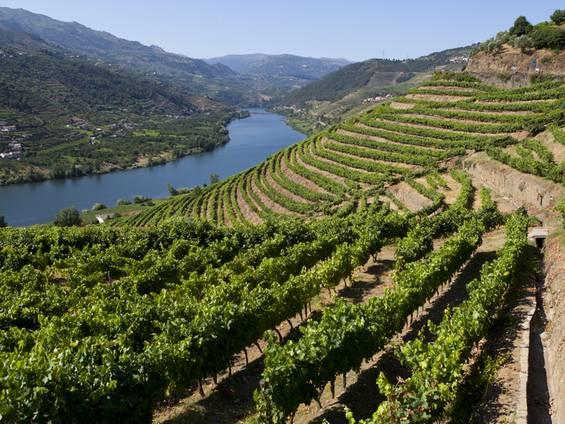 Portugal, Weinberge, Douro, Foto: iStock/LuisPortugal