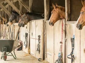 Reiterhof kaufen, Boxenhaltung, Foto: Tanja Esser/stock.adobe.com