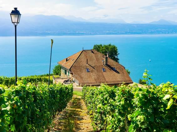 Weingut kaufen, Immobilie, Foto: iStock/ RomanBabakin