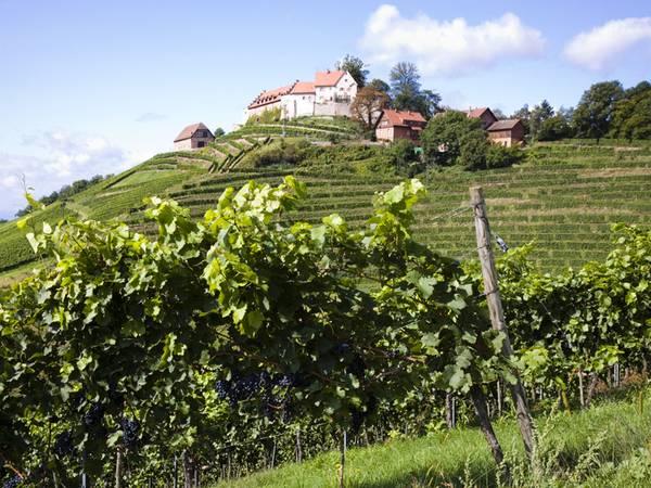 Weingut kaufen, Weinberg kaufen, selten aber lukrativ, Foto: iStock/schmidt-z