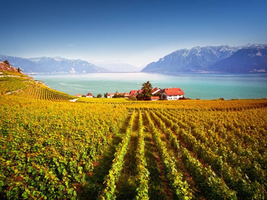 Weingut kaufen, Weinberg kaufen, selten aber lukrativ, Foto: iStock/ antares71