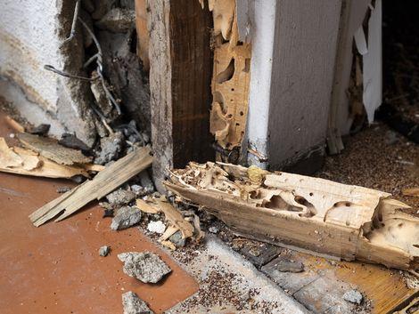 Holzhaus, Ungeziefer, Termiten, Foto: Mel Stoutsenberger/fotolia.com