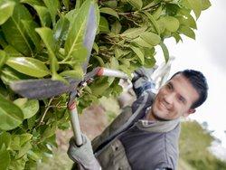 Grenzbepflanzung, Hecke trimmen, Foto: auremar/fotolia.com