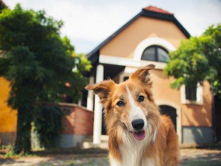 Hund, Mietswohnung, Haustierhaltung, Haustiere, Mietvertrag, Foto: ksuska / fotolia.com