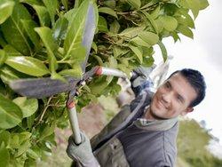 Grenzbepflanzung, Gartenschere, Foto: auremar/StockAdobe.com