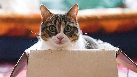 Umzug planen, Umzugsplanung, Wohnortwechsel, Katzen, Haustiere, Umzugskartons, Foto: iStock.com/FilippoBacci