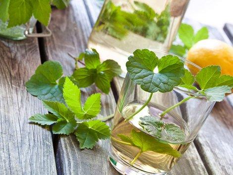 Unkraut, Giersch, Limonade, Foto: PhotoSG/fotolia.com