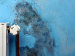 Schimmel, Schaden, Wand, Schimmel entfernen, Foto: adam88xx/Stock.adobe.com