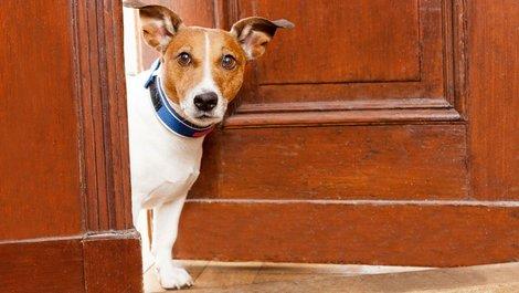 Hund guckt aus Fenster, Einbruchschutz, Wachhund, Foto: Javier Brosch / adobe.stock.com
