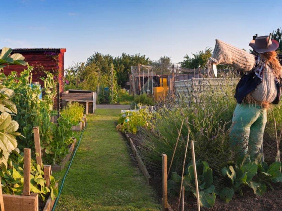 Schrebergarten, Kleingarten, Gartenparzelle mit Vogelscheuche, Foto: iStock.com/RachelDewis
