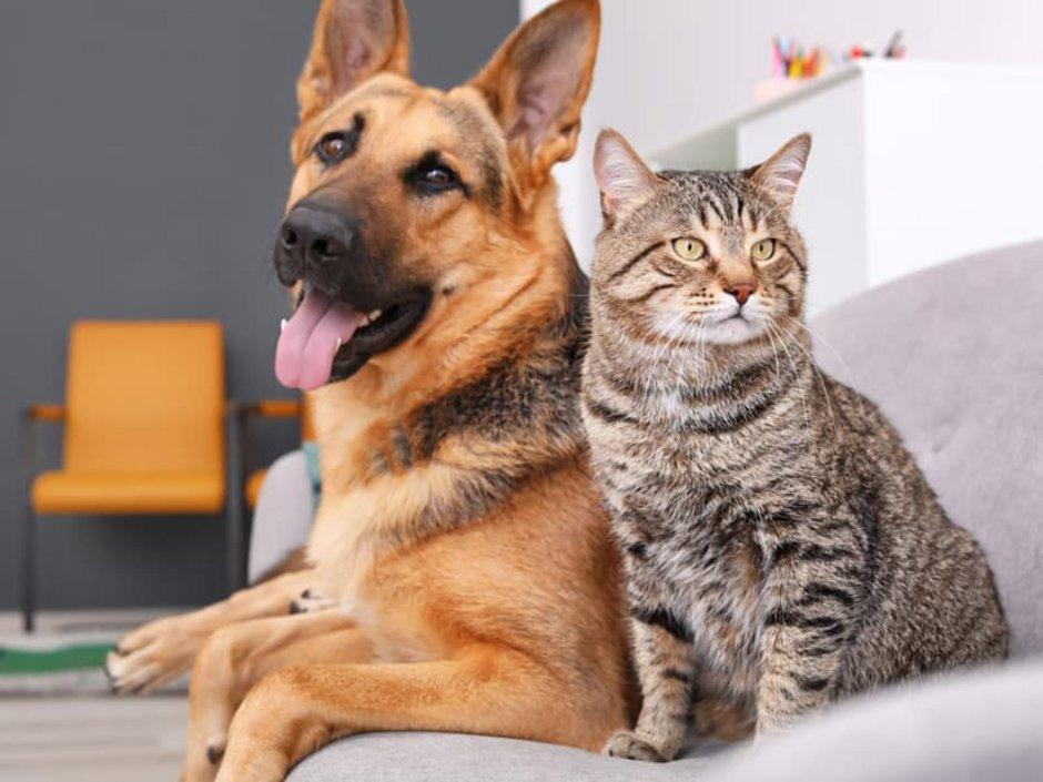 Nachbarschaftsrecht, Hund und Katze in Frieden vereint, Foto: New Africa/stock.adobe.com